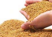 Phương pháp điều trị tiểu đường an toàn bằng hạt cà ri ít người biết