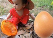 Bé Đi Nhặt Trứng Gà ❤ Bé Giúp Mẹ Làm Bánh Flan ❤ Be Nhi TV
